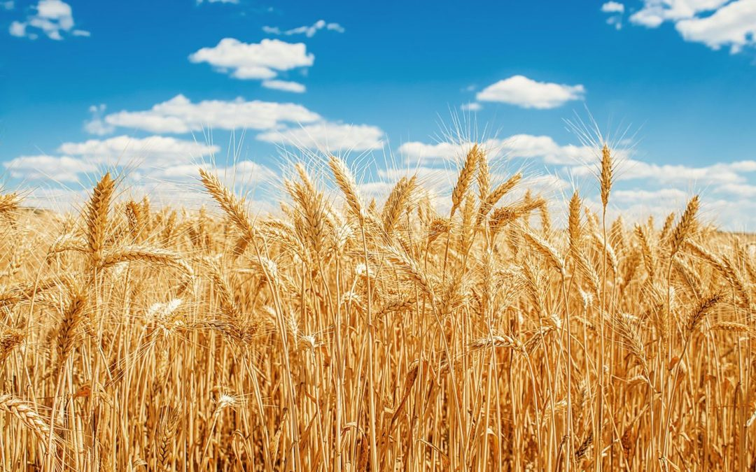 Who owns all the grain?