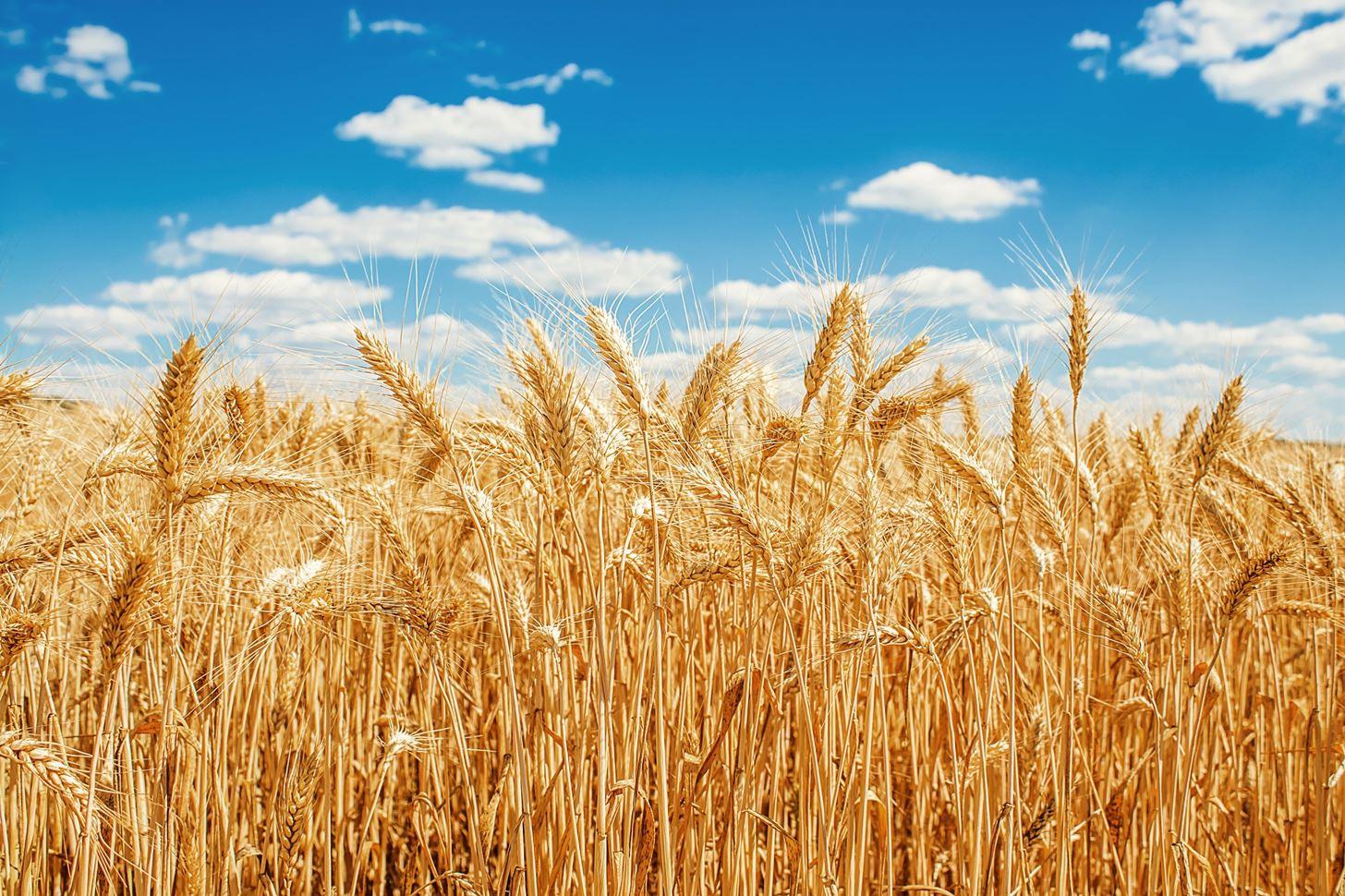 nix grain brain anti gluten train its good eat whole grains w1456 2